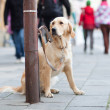 Lonely cute dog waiting patiently for his master on a city stree — Stock Photo
