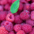 Raspberries — Stock Photo #7418061
