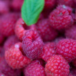 Raspberries — Stock Photo #7418077