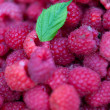 Raspberries — Stock Photo #7418084