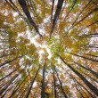 Autumn forest treetops — Stock Photo