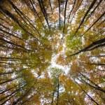 Autumn forest treetops — Stock Photo #7419099