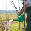 Watering orchard/garden - portrait of a senior man gardening in — Stock Photo