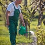 Portrait of a senior man gardening in his garden — Stock Photo #7419631