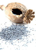 Poppy head and poppy seed poured out on white surface — Stock Photo