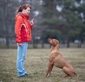 Master and her obedient (rhodesian ridgeback) dog — 图库照片