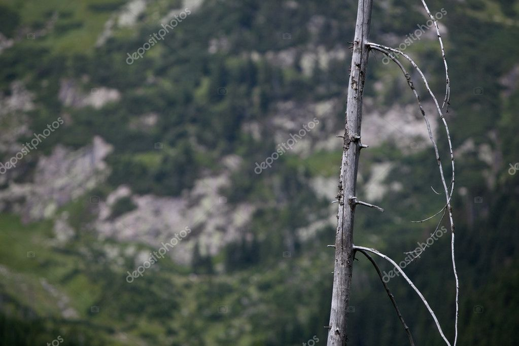 Dead tress in an alpine forest — Stock Photo #7419885