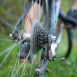 Stock Photo: Biking - rear wheel of a young woman's mountain bike on a green