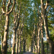 Lovely, empty country road lined with sycamore trees in Provence - Stock Photo