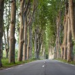 Lovely, empty country road lined with sycamore trees in Provence — Stock Photo #7420415
