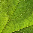 Green leaf close-up — Foto Stock