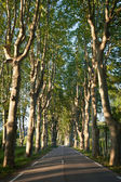 Lovely, empty country road lined with sycamore trees in Provence — Stock Photo
