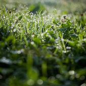 Lovely morning dew — Stock Photo