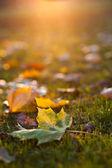 Lovely autumn leaves at sunset — Stock Photo