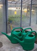Greenhouse series - inside a greenhouse — Stockfoto