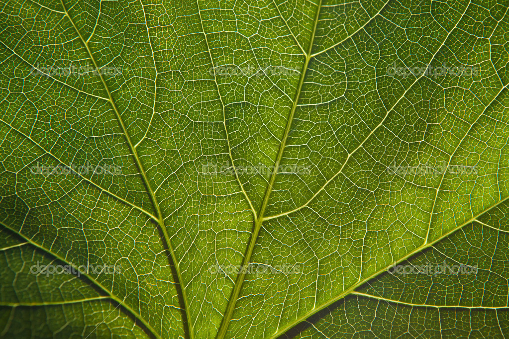 Green leaf close-up  Stock Photo #7422505