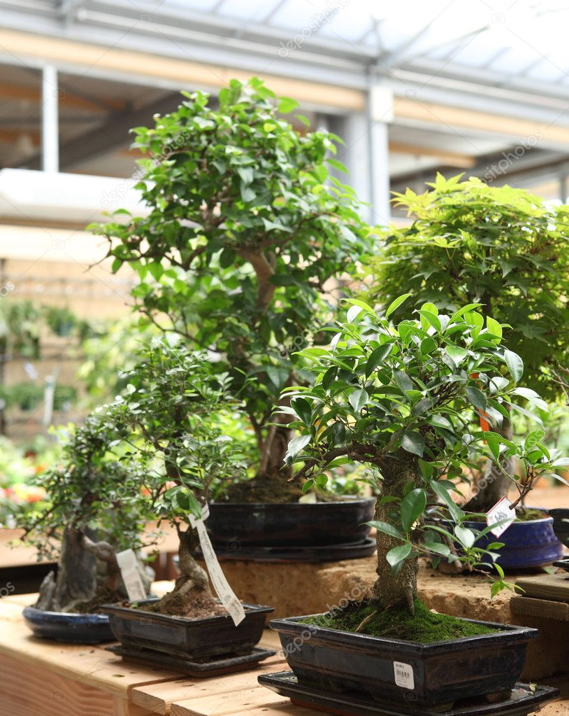 Bonsai trees  — Stock Photo #7423305