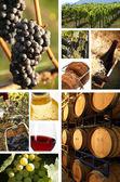 Collage of wine — Stock Photo