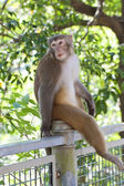 Monkey looking in wild environment — Stock Photo