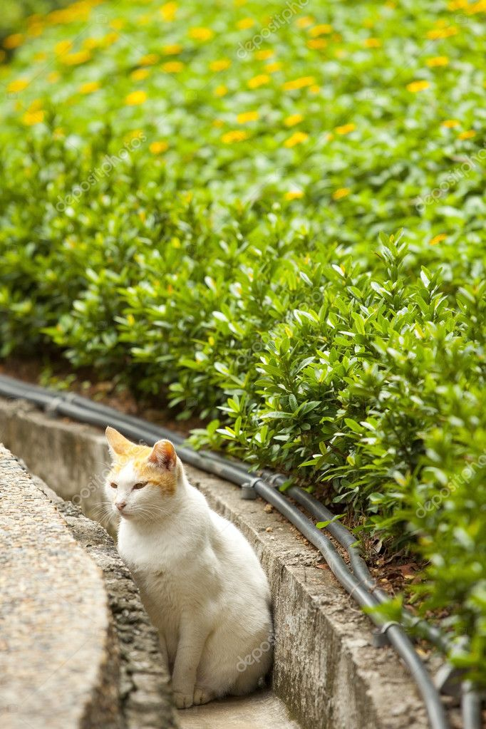 A cat in countryside waiting pray — Stock Photo #7760552