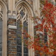 Duke University Chapel Window Detail — Stock Photo