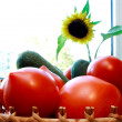 Foto of cucumber and tomatoes and sunflower — Stock Photo