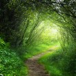 Stock Photo: Way in deep forest