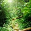 Way in jungle of Malaysia — Stock Photo #6841589
