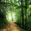 Stock Photo: Way in jungle of Malaysia