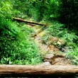 Way in jungle of Malaysia — Stock Photo