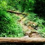 Way in jungle of Malaysia — Stock Photo #6841746