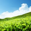Tea plantation — Stock Photo #6841780