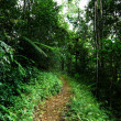 Way in jungle of Malaysia - Photo