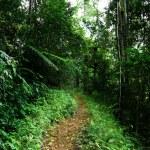 Way in jungle of Malaysia — Stock Photo #6841978
