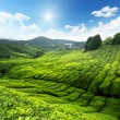 Tea plantation Cameron highlands, Malaysia — Stock Photo #6842274