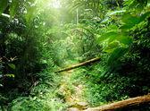 在丛林中的马来西亚的方式 — 图库照片