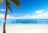 Palma y mar — Foto de Stock