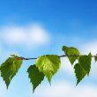 Leaf of birch and spring day - Stock Photo