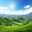 Teplantation Cameron highlands, Malaysia — Stock Photo #6973878