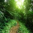 Way in jungle of Malaysia — Stock Photo #6973965