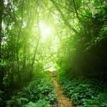 Way in jungle of Malaysia — Stock Photo #6974474