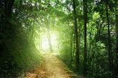 Way in jungle of Malaysia — Stock Photo