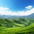 Teplantation Cameron highlands, Malaysia — Stock Photo #7125489