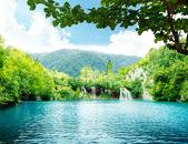 Jezero v hlubokých lesích — Stock fotografie
