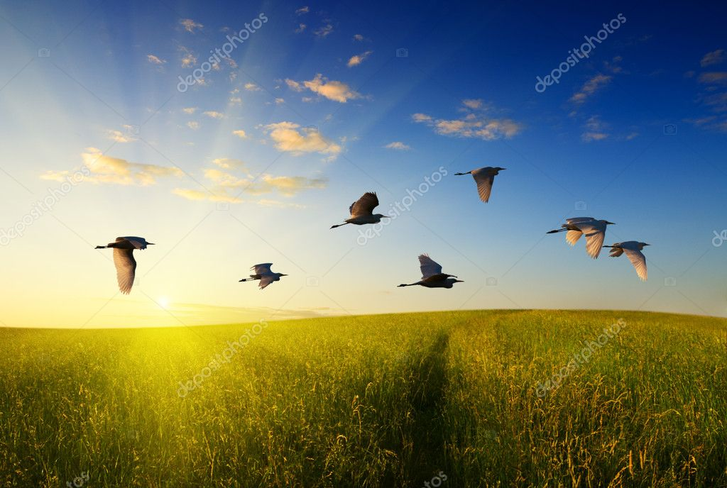 Field of grass and flying birds  Stock Photo #7125428