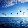 Birds and caribbean sea — Stock Photo