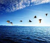Birds and caribbean sea — Stock Photo