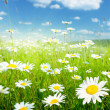 Field of summer flowers - Stock Photo