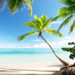 Palms on Caribbean beach - Stock Photo