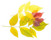 A variety of autumn leaves — 图库照片
